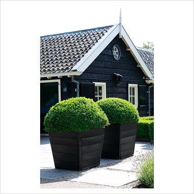 buxus in grote houten plantenbakken