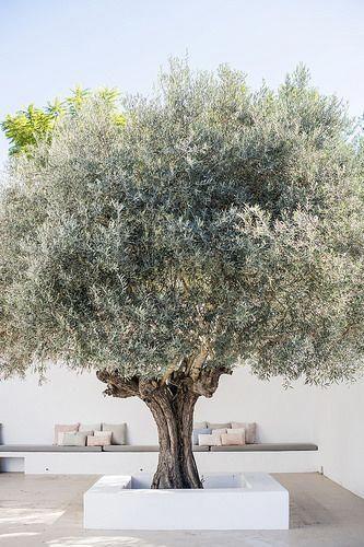ecru geeft een mediterraans jasje aan de moderne tuin 2