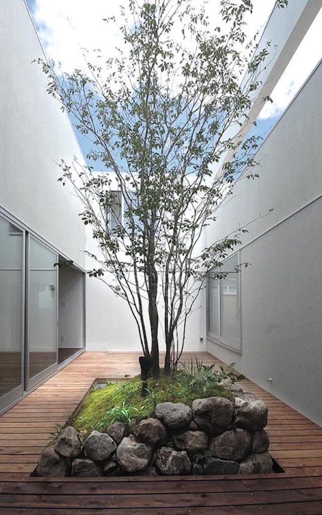 een mooie boom midden in de open lucht plaats van een tuin