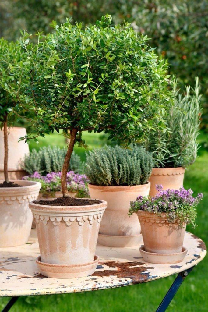 mediterraanse plantenbakken