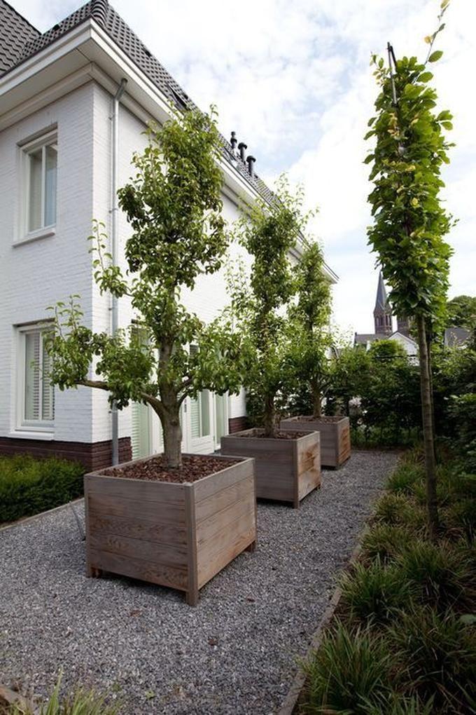 voortuin idee voor bomen in planten bakken