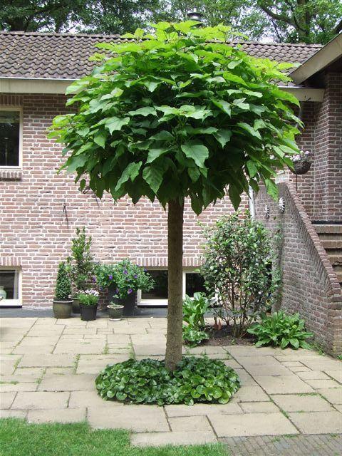 Een bolboom in voortuin ontwerp