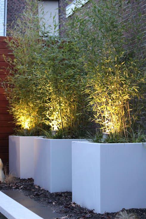 bamboe in mooie grote plantenbakken
