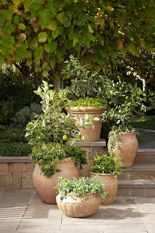 planten in mediterraanse plantenbakken