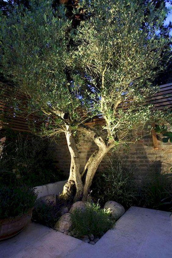 een decoratief verlichtte olijfboom