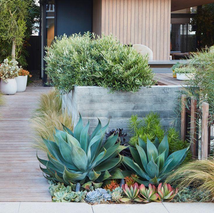 verschillende woestijnplanten in een moderne tuin