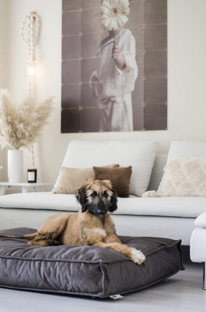 2L Home & Garden Hondenkussen Velvet Antraciet - 120 x 80cm (1)