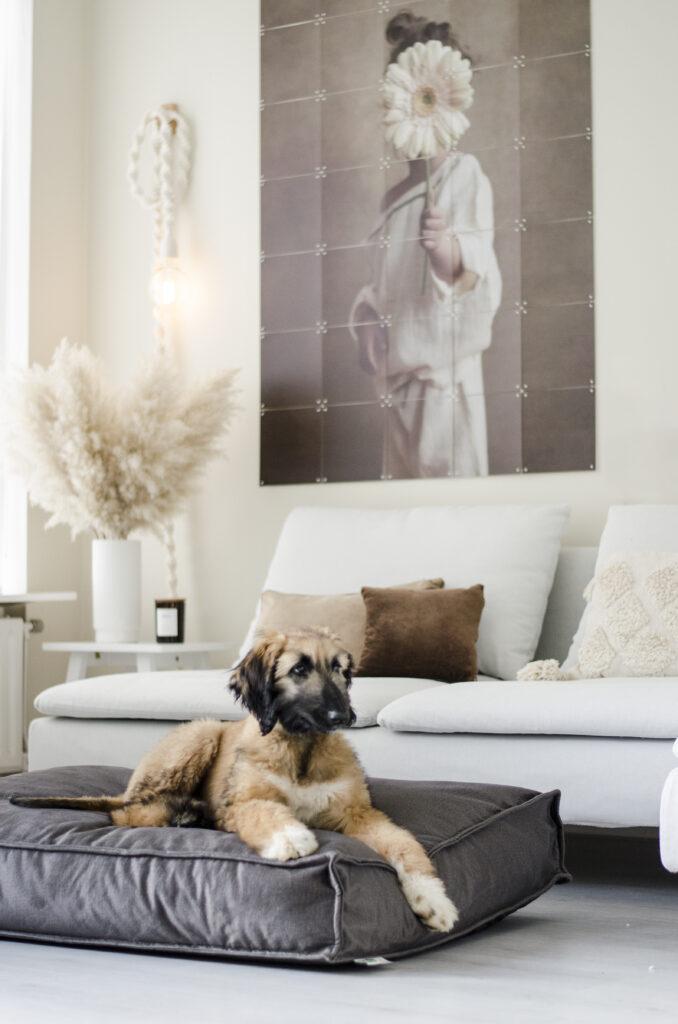 2L Home & Garden Hondenkussen Velvet Antraciet - 120 x 80cm (4)