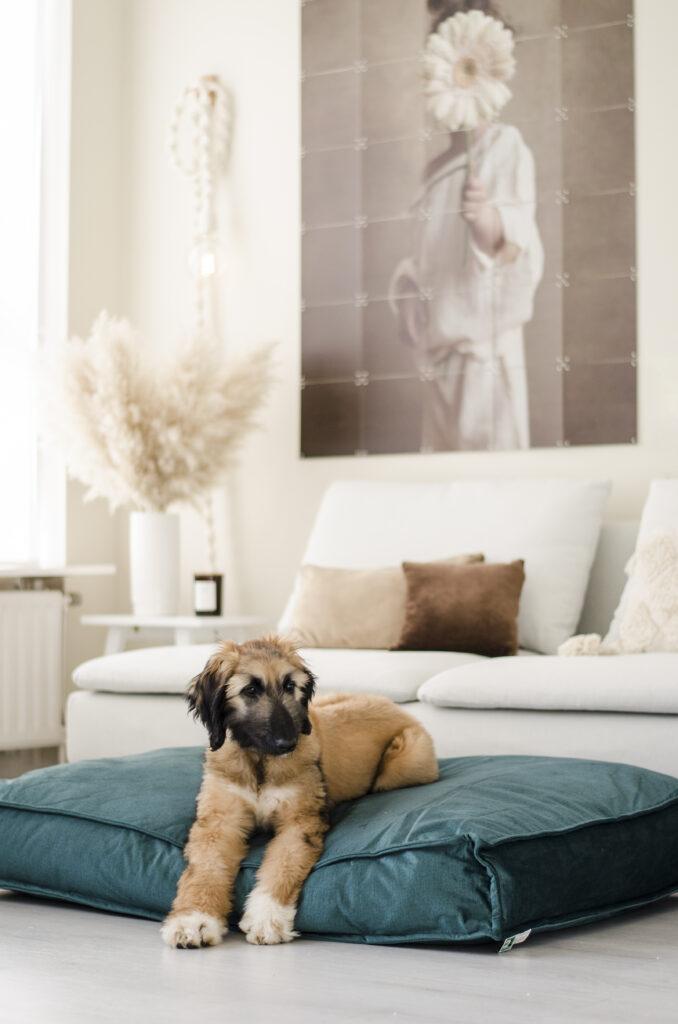 2L Home & Garden Hondenkussen Velvet Donkergroen - 120 x 80cm (6)